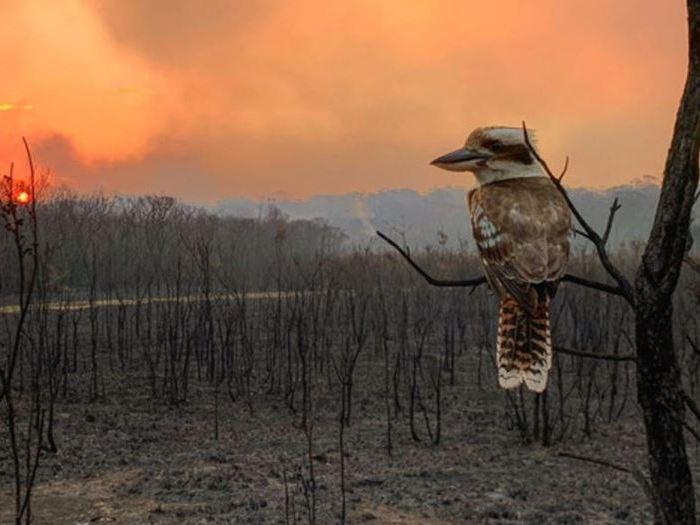 GCSE 9-1; Climate change - 2019 Australian bush fires,  El Nino drought case study