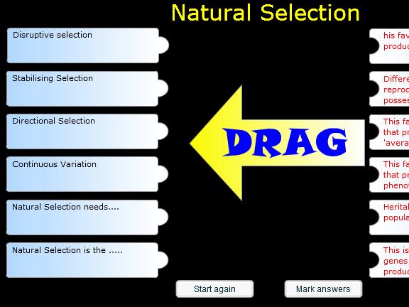 Starter or Plenary Game involving 'Natural Selection'.