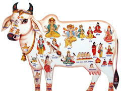 The Importance of the Cow