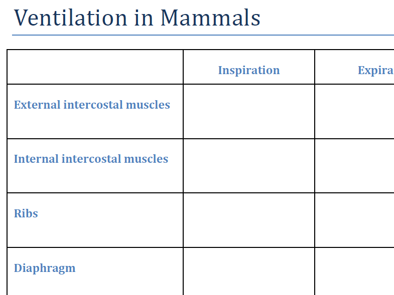 How we breathe - Ventilation in Mammals - Answers included