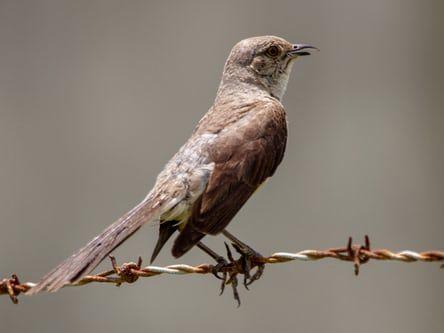 """To Kill A Mockingbird"" by Harper Lee - Context"