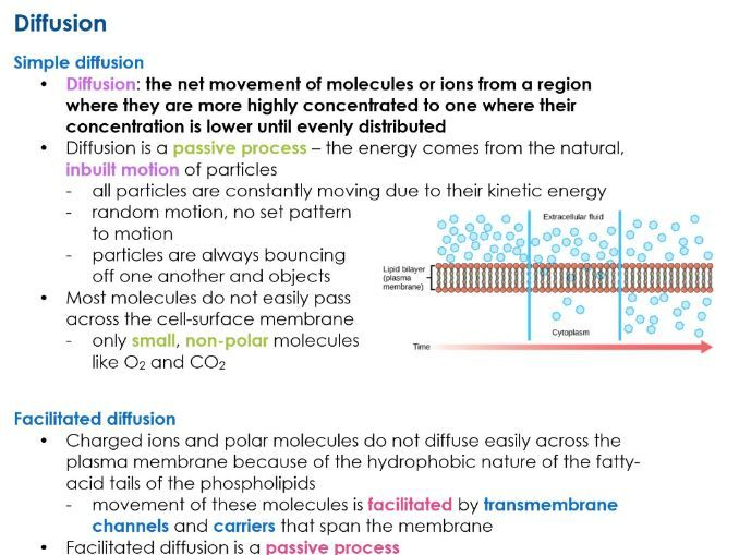 AQA 7402 A Level TRANSPORT ACROSS CELL MEMBRANES Biology notes for NEW  SPEC