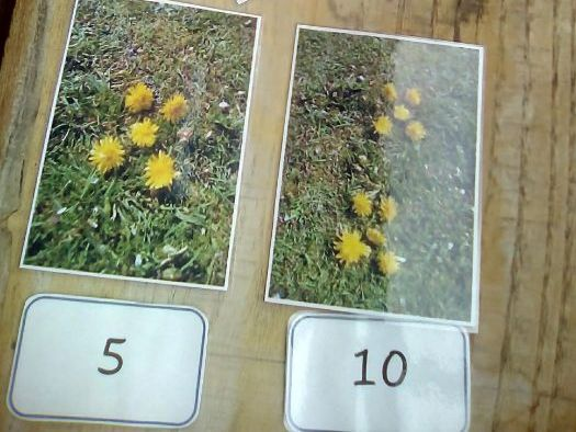 Dandelion Groups of Five and  Number Cards