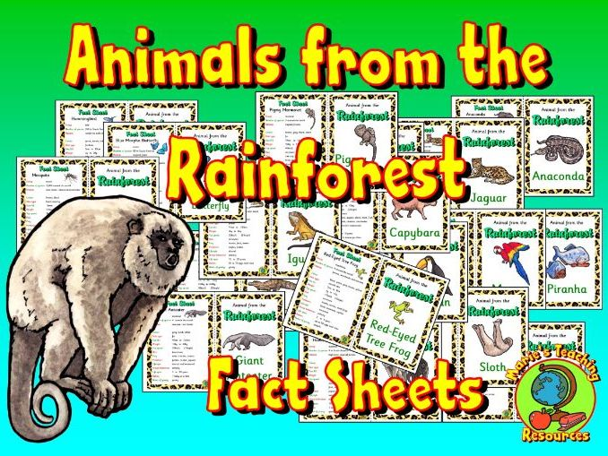 Animals from the Rainforest - Fact Sheets