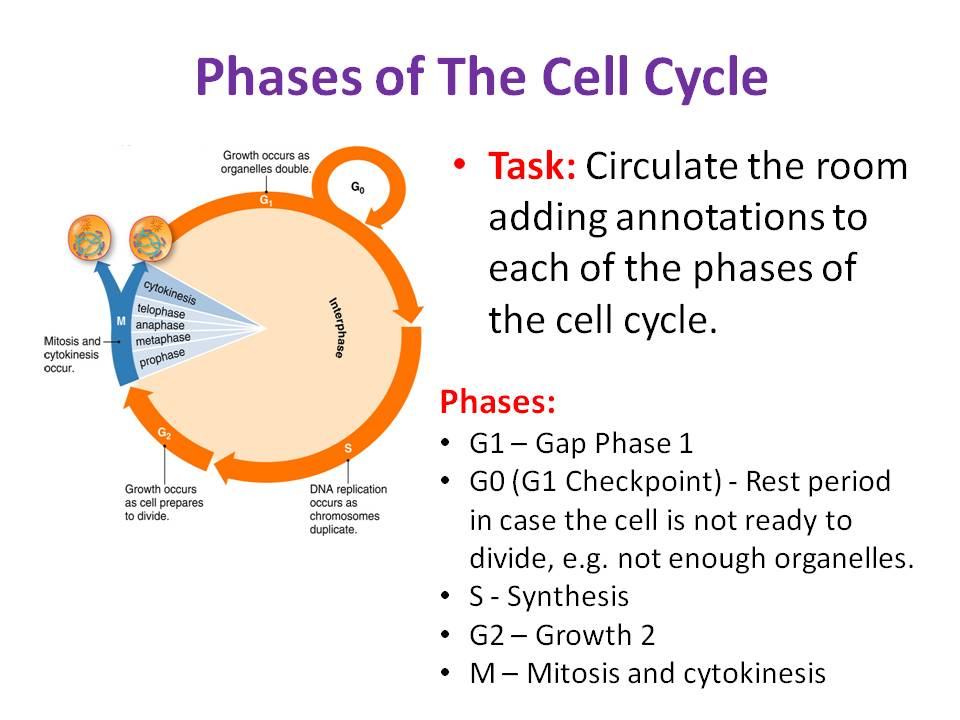 The Cell Cycle & Mitosis - OCR AS/A Level Biology