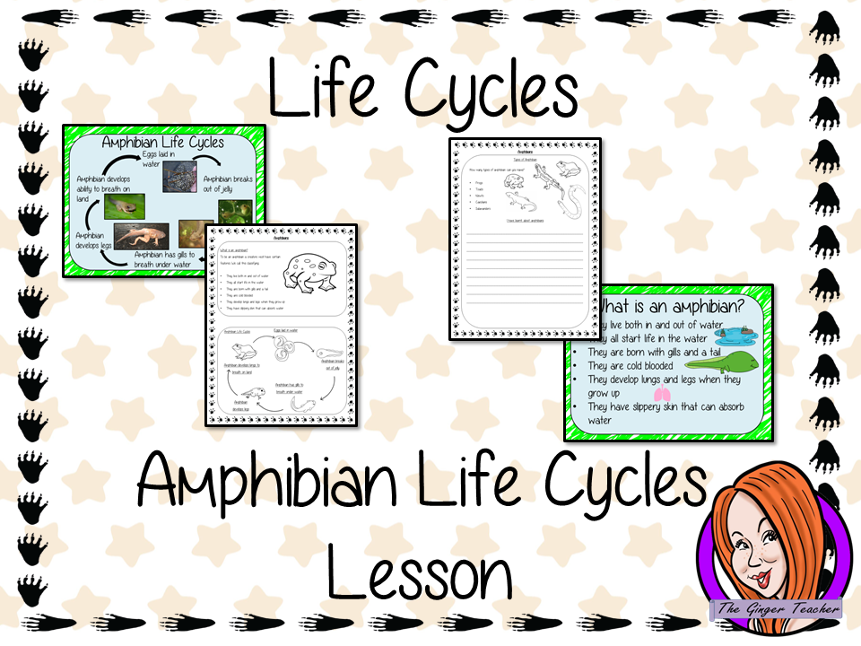 Amphibian Life Cycles   -  Complete Science Lesson
