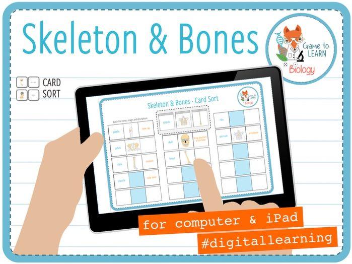 Skeleton and Bones - Digital Card Sort (KS2/3)