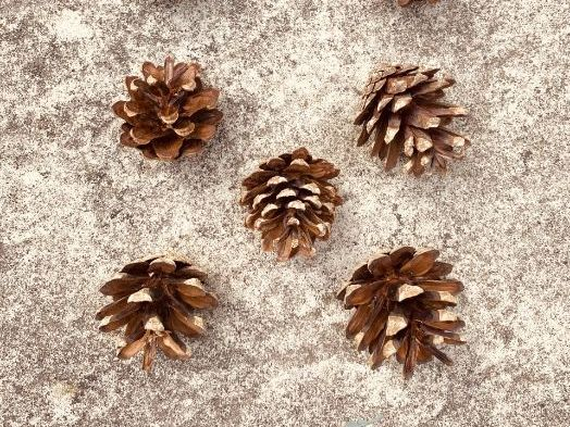 EYFS pine cone nature number representation display cards 0-10