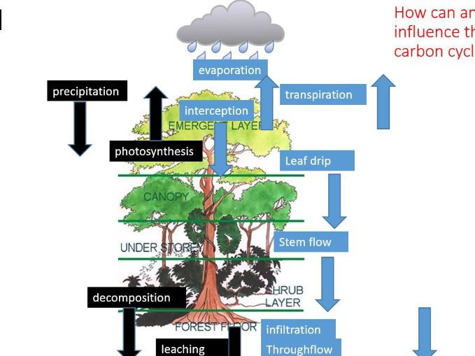 A Level; case study of a rainforest - human factors affecting water and carbon cycles