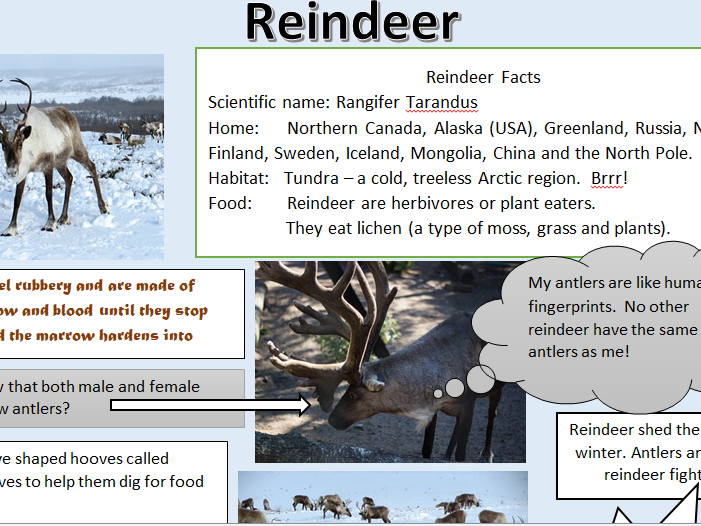 KS2 set of 4 Science/Geography Reindeer resources