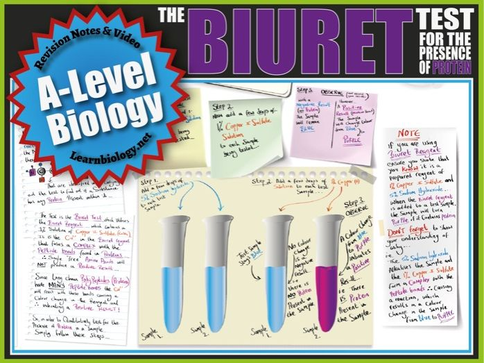 The Biuret Test for Proteins (Food Tests) - A-Level Biology Revision Notes, video and Worksheet.