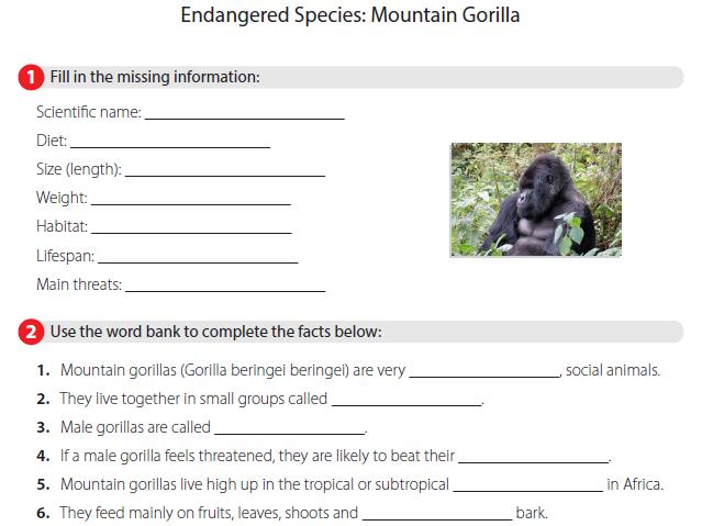 Endangered Species - Mountain Gorilla
