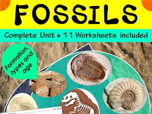 Fossils: Formation, types and age {Unit with worksheets}