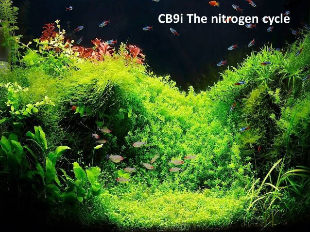 CB9i The Nitrogen cycle