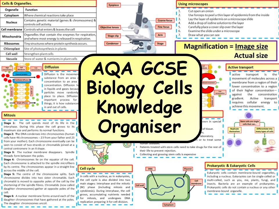 KS4 AQA GCSE Biology (Science) Cells Revision Knowledge Organiser | Teaching Resources