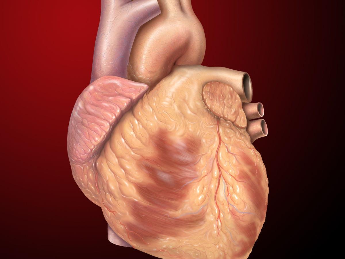 Cardio-Vascular Learning Mat Pack