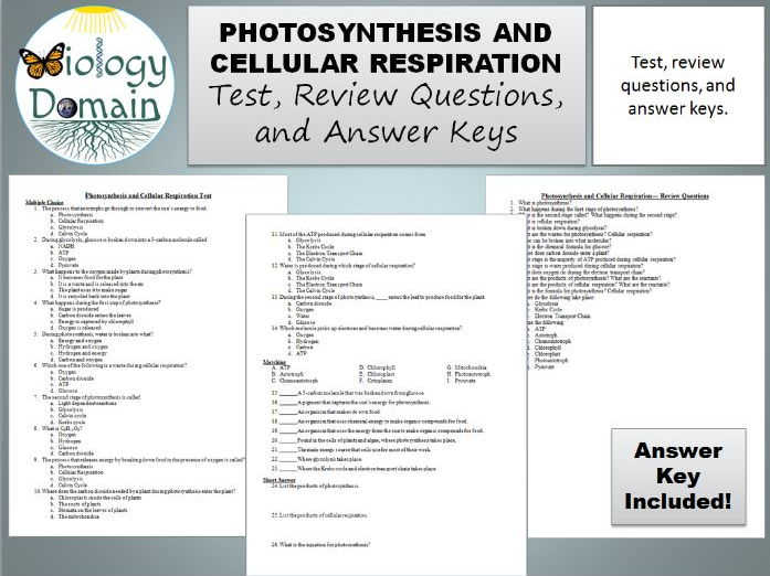 Photosynthesis and Cellular Respiration Test, Review Questions ...