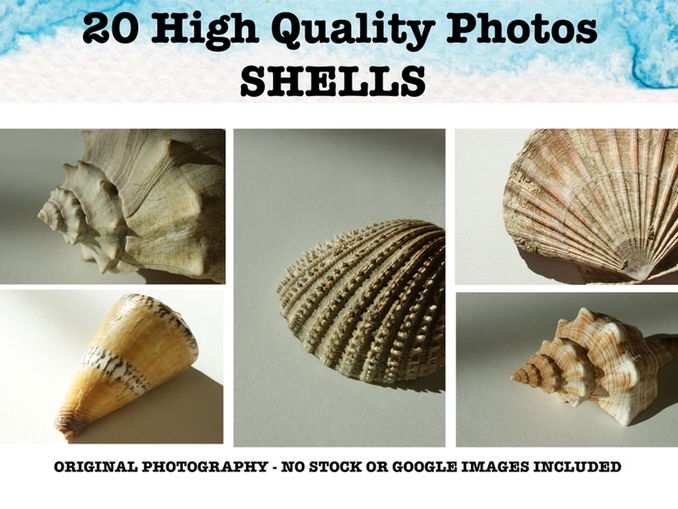 Shells - Photo resource pack