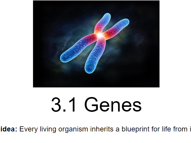 IB Biology - 3. Genetics - PowerPoint Presentations