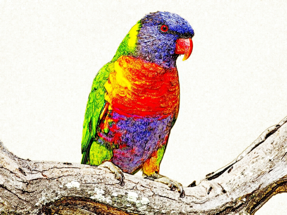 Analysing Rainbow Lorikeet Survey Data using Python 3.