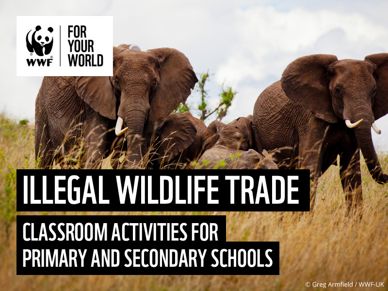 Illegal Wildlife Trade - Activities for Primary and Secondary Schools
