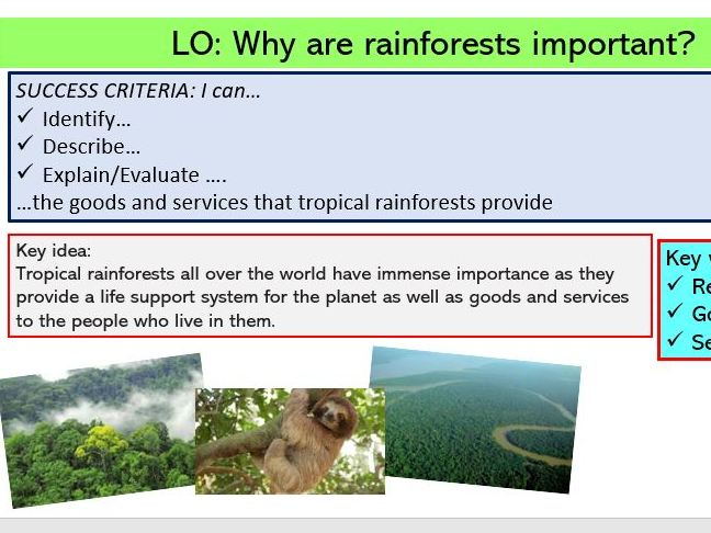 L3. Why is the rainforest important?