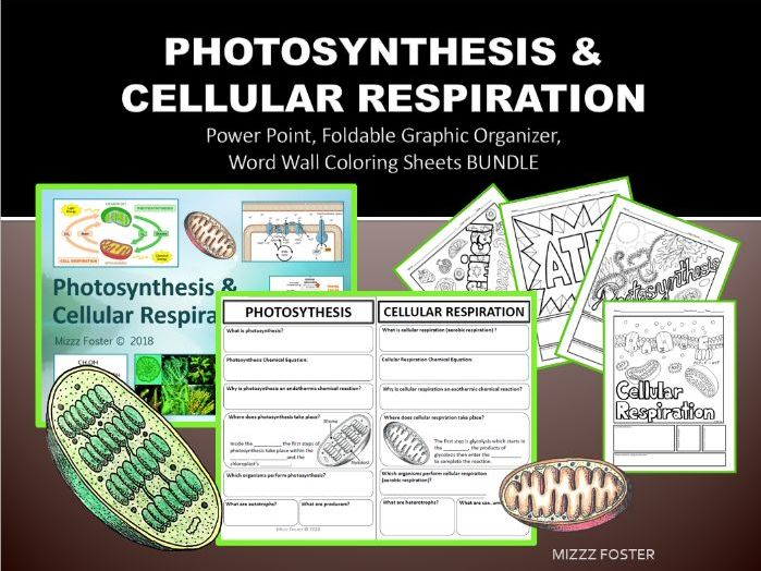 Photosynthesis and Cellular Respiration Bundle: PPT, Foldable for INB, Word Wall Sheets
