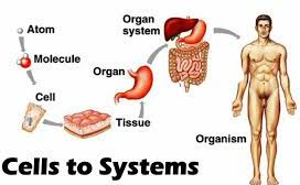 Year 7 (KS3) - Science - Biology - Unit 7A - Cells and Systems Bundle