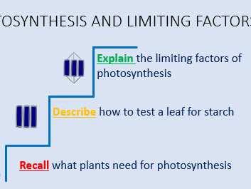 Photosynthesis and limiting factors lesson