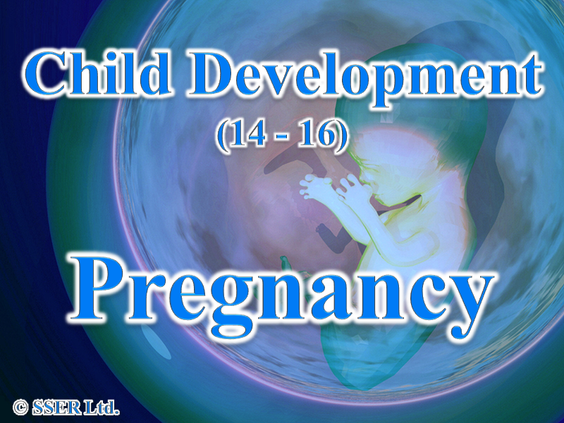 4.3 Child Development - Reproduction - Pregnancy