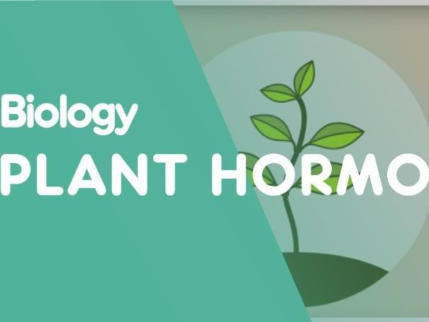 Commercial uses of Plant Hormones With Answers