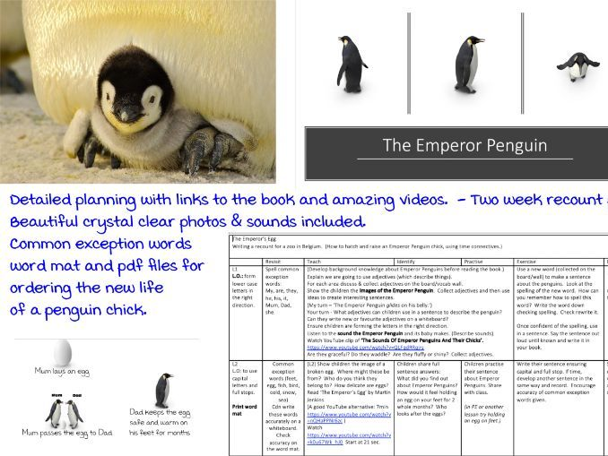 Year 1 Recount with resources and links - The Emperors Egg - 2 Week English Plan. KS1 Recount