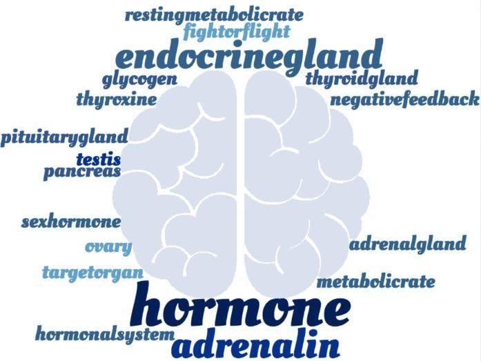 Hormones & Metabolism Crossword - EDEXCEL GCSE (9-1) Combined Science Paper  2