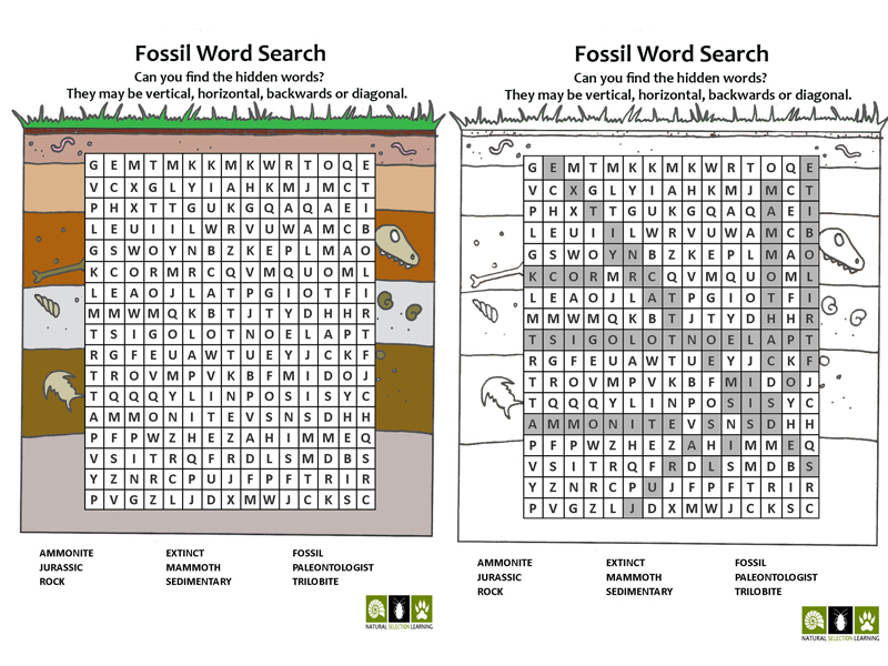 Fossil Vocabulary Word Search (Colour and Black/White) With Answers