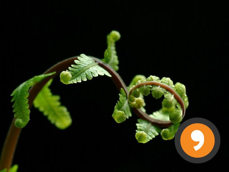 La Naturaleza - Nature - Review Quiz