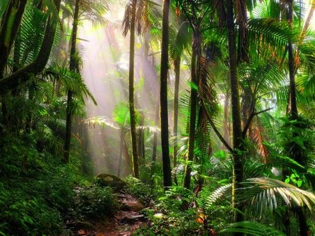 Tropical Rainforests - Forests under Threat - GCSE Edexcel Geography