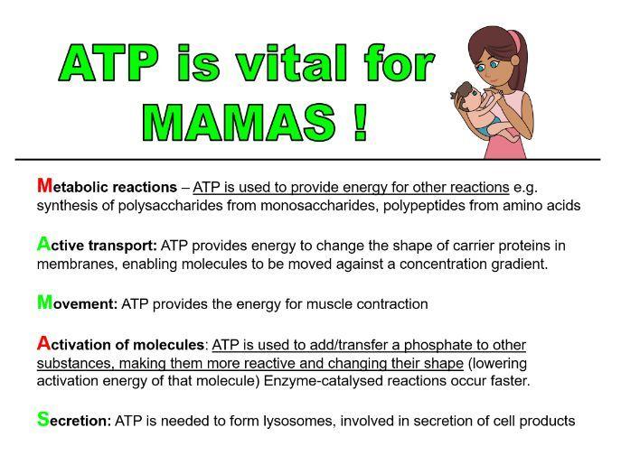 ATP (adenosine triphosphate) - AS Unit: Biological Molecules (AQA)
