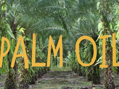 Learn at Chester Zoo - Palm Oil Perspectives - What can YOU do?