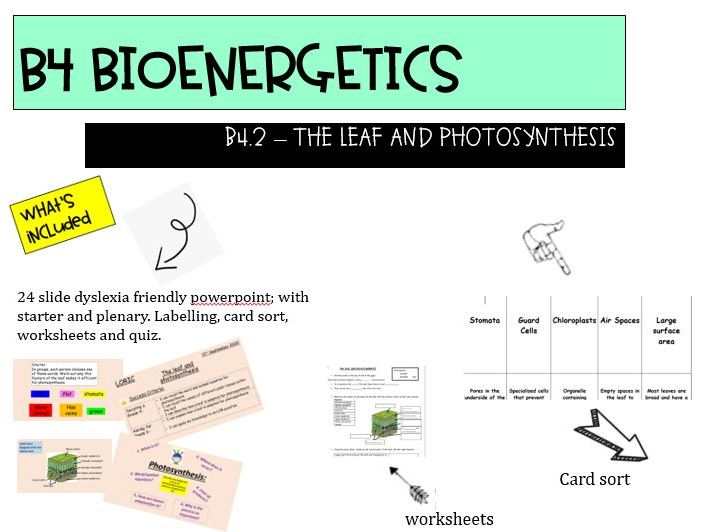AQA NEW GCSE 9-1 TRILOGY B4.2 The Leaf and photosynthesis LOWER ABILITY