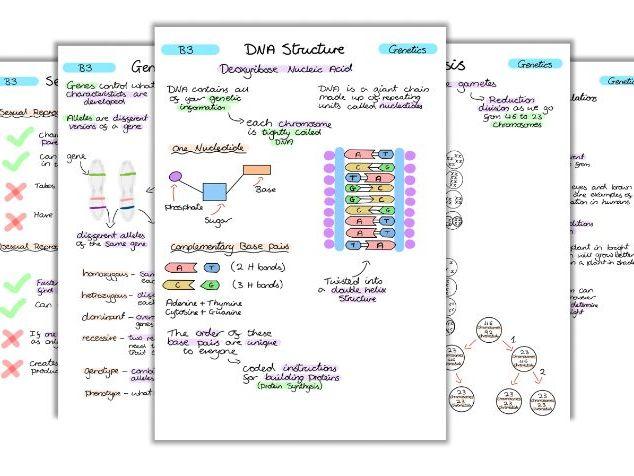 GCSE Biology Genetics Notes