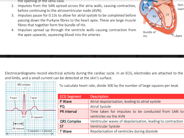 A Level Biology - Edexcel Topic 7 Notes