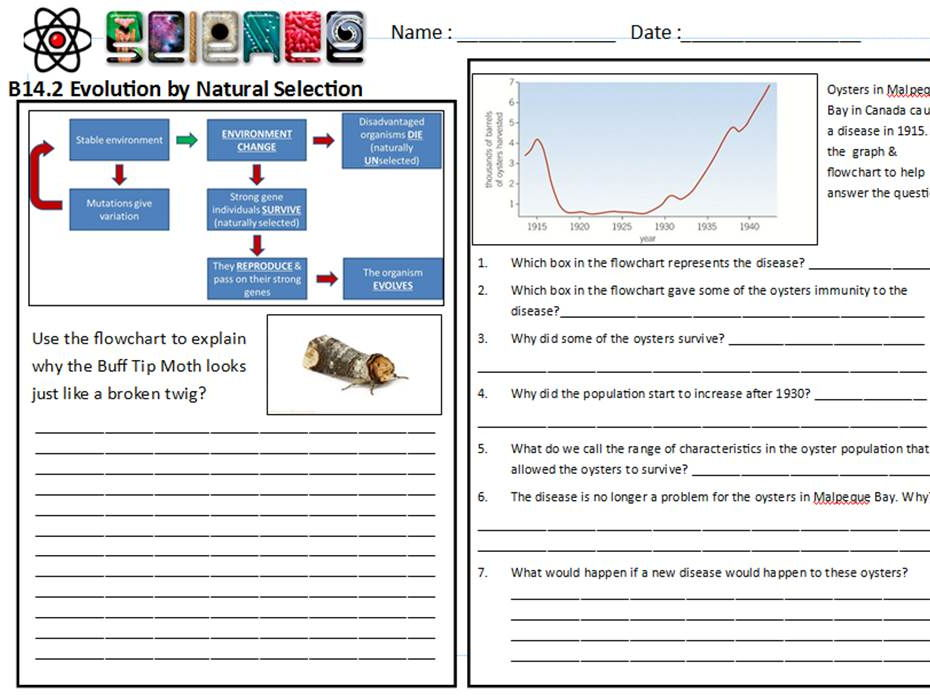 Evolution and natural selection worksheet answers key