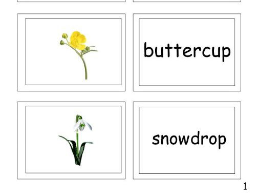 Flowers and Leaves Picture and Word Matching Cards