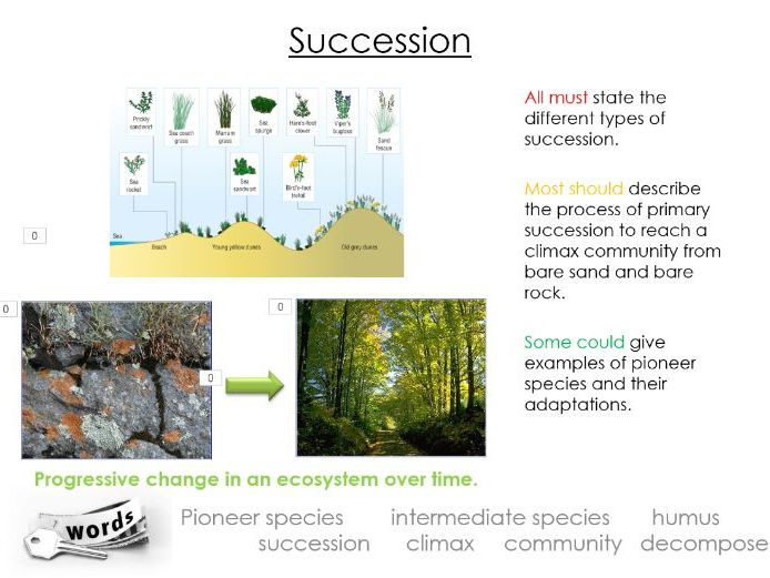 OCR ALevel Biology A Ecosystems Succession PowerPoint