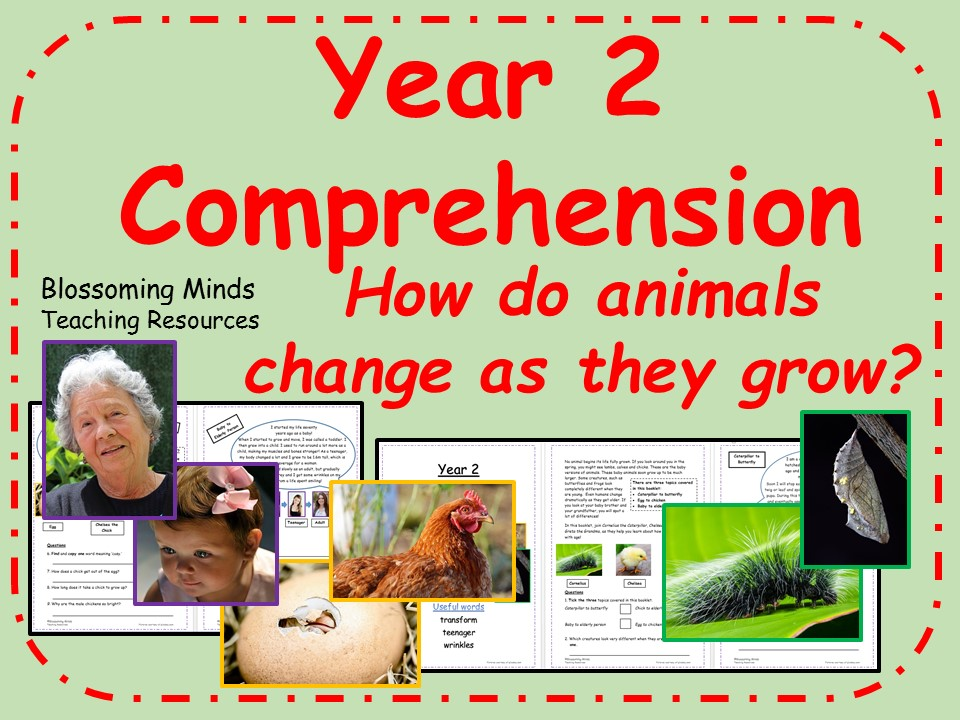 Year 2 Reading Comprehension Paper - How animals change as they grow
