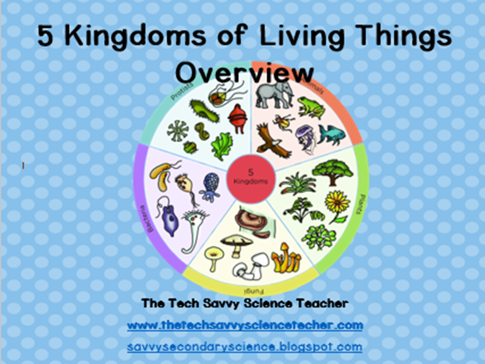 5 kingdoms of living things classification overview presentation by thetechsavvyscienceteacher. Black Bedroom Furniture Sets. Home Design Ideas