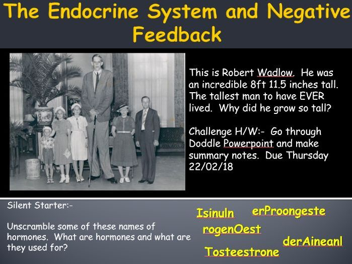 AQA Trilogy Biology B5.3 - The Endocrine System and Negative Feedback