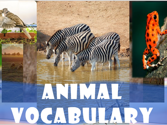 ESL Animal Vocabulary lesson - identifying animals, syllables, phonetics - presentation / worksheets