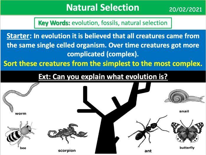 Natural Selection (AQA KS3)