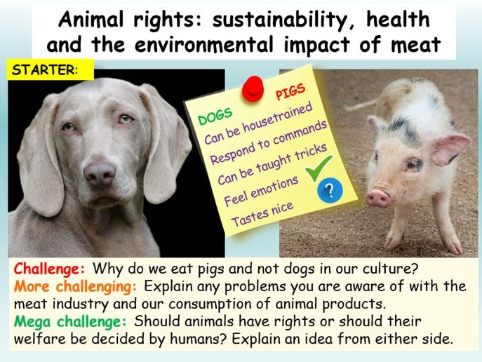 Animal Rights + Sustainability